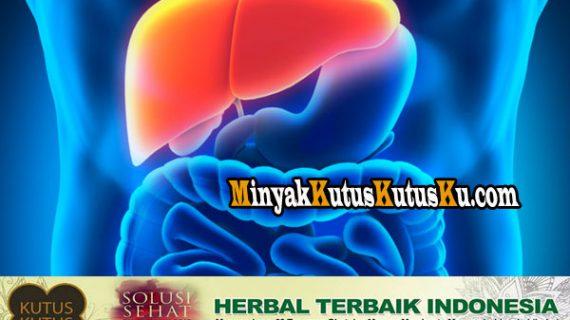 Terapi Penyakit Hepatitis Menggunakan Minyak Kutus Kutus